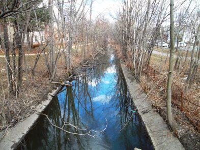Alewife Brook